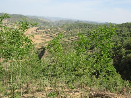 A field trip to the Loess Plateau, China, enabled Mauritanian, Nepalese, French, South African and Seychellois environmentalists to observe large scale restoration of forests over hundreds of thousands of hectares